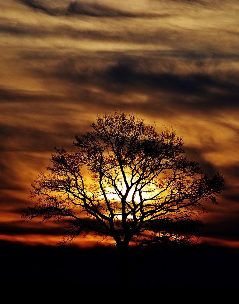 Baum in Flammen