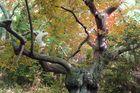 Baum in Locoal