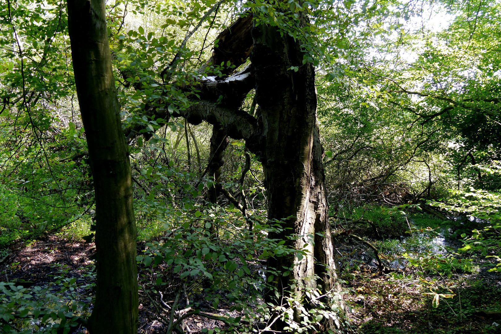 """Baum in """"Menschengestalt."""""""