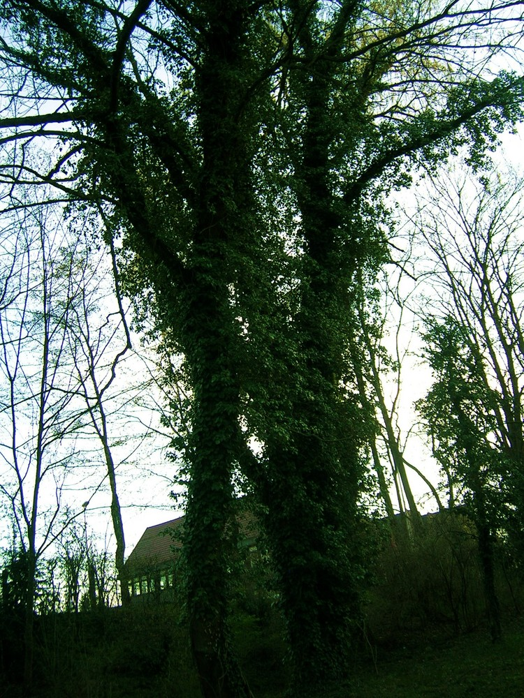 Baum in mystischer Atmosphäre..