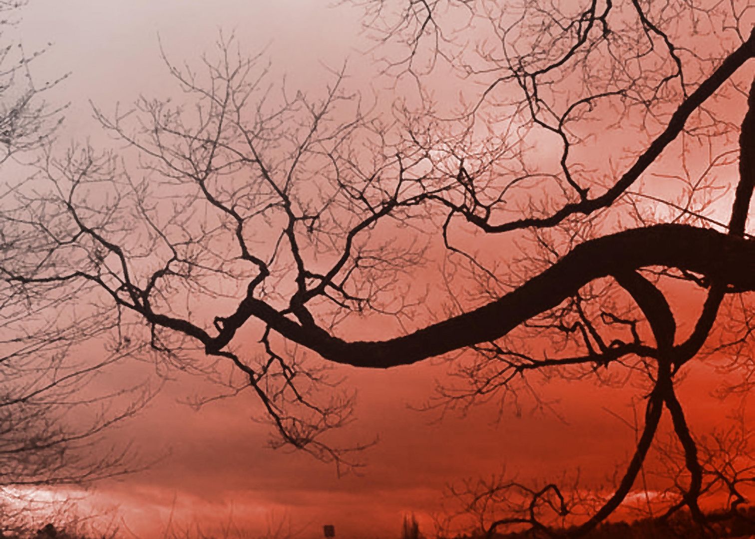 Baum in Spanien