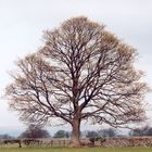 Baum in West Borton, North Yorkshire