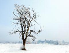 Baum in Wetzikon
