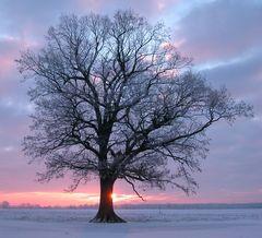 Baum in winterlichen Gegenlicht