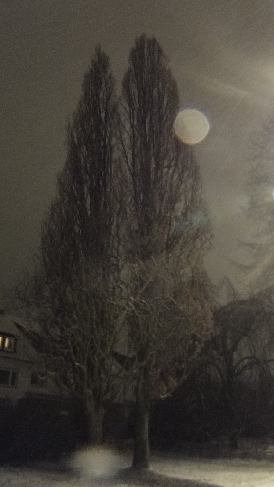 Baum in Wintermondschein