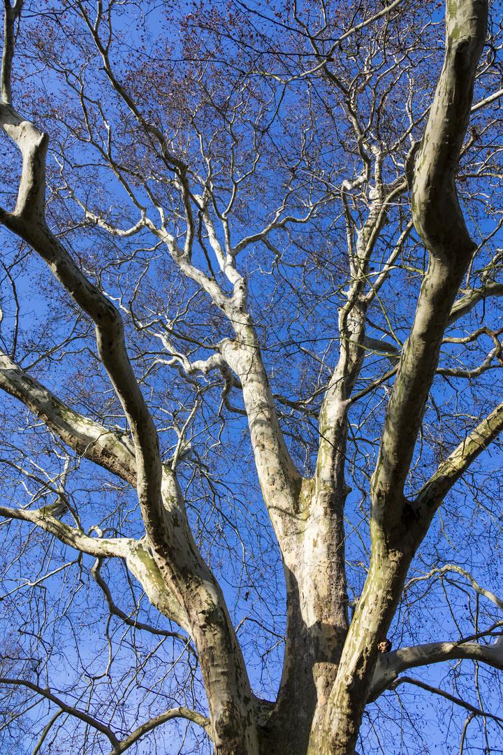 Baum in Wintersonne