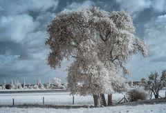 Baum Infrarot