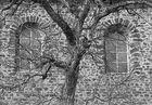 baum | kloster