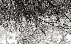 Baum küsst Teich