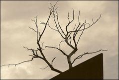 Baum + Kunst