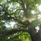 Baum ... mal anders..