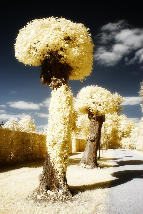 Baum mit Afrolook