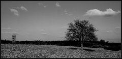 Baum mit Anstand