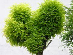 Baum mit ....