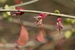 Baum mit fantastischen Blüten auf Hauchabfontein