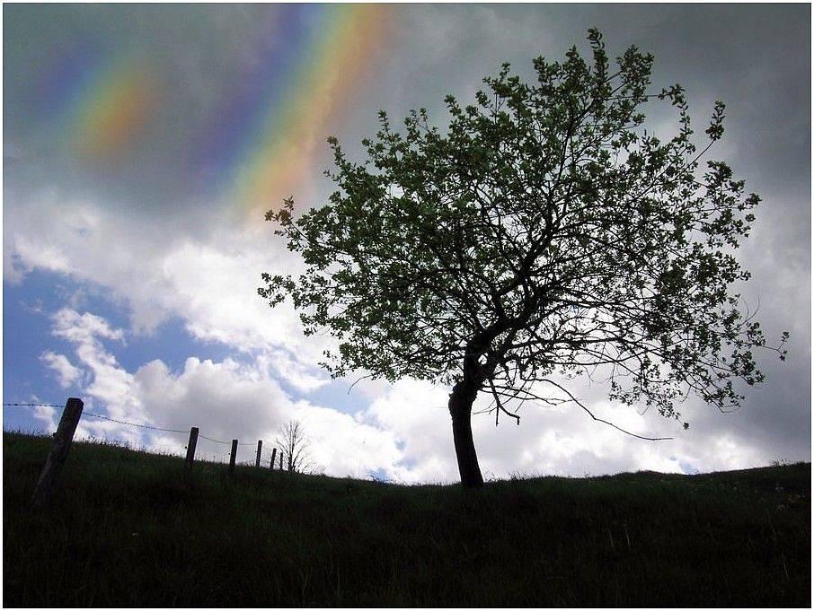 Baum mit Farbstreifen