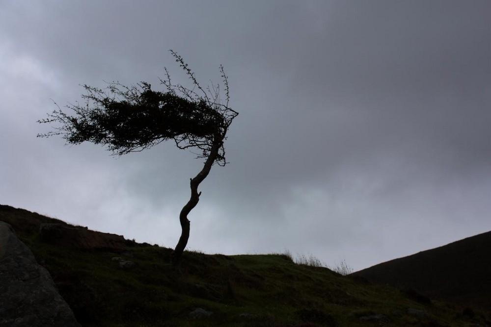 Baum mit Föhnfrisur