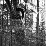 Baum mit Henkel