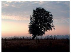Baum mit herzförmigen Blättern...
