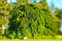 Baum mit Hund