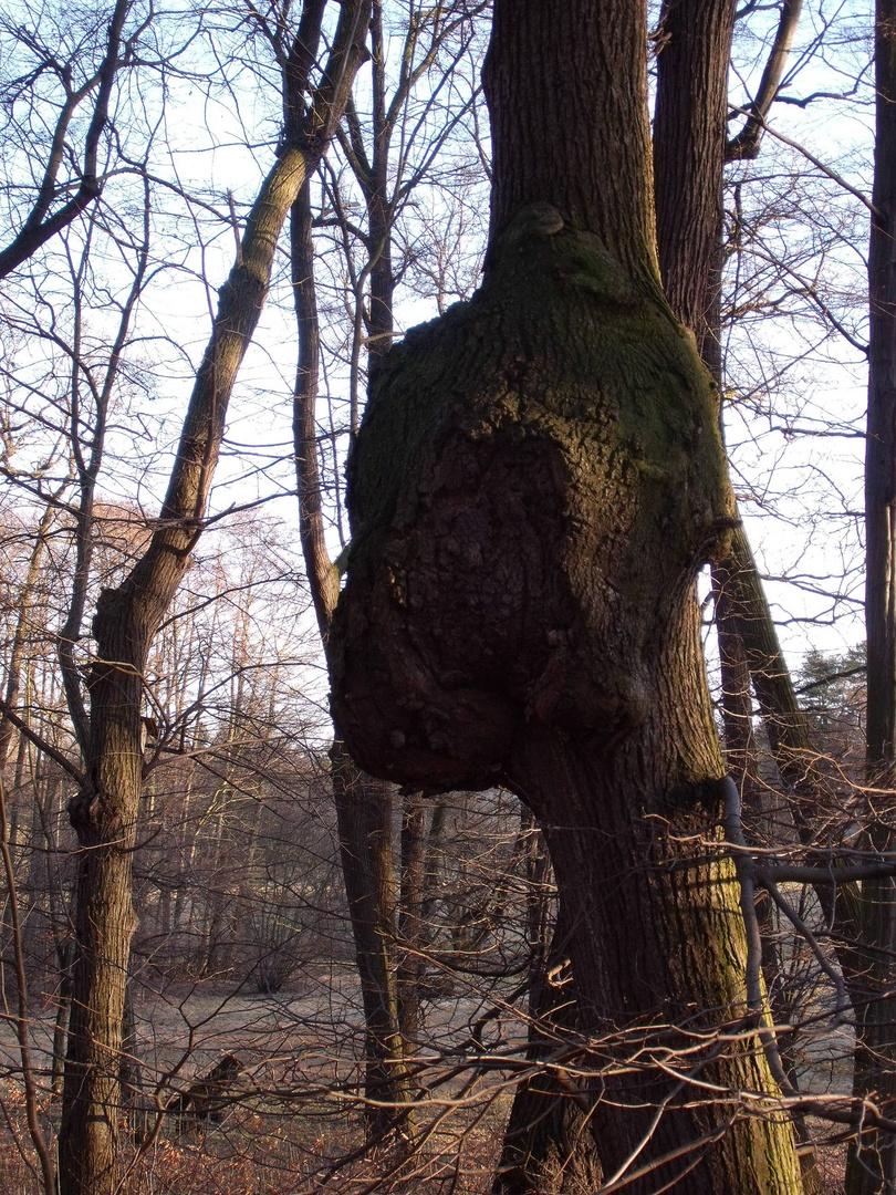 Baum mit Köpfchen
