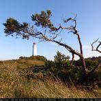 Baum mit Leuchtturm