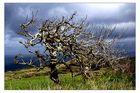 Baum mit Meerblick