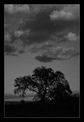- Baum mit Mond -