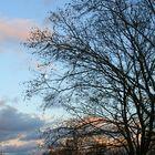 Baum mit Mond und Abendrot