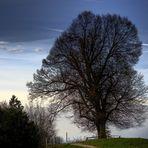 Baum mit Nebelmeer