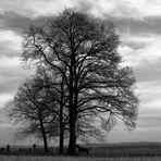 Baum mit Pferd