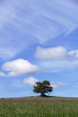 Baum mit Raum