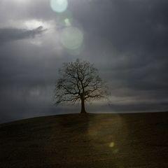 Baum mit Sabinchen