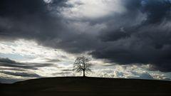 Baum mit Sabine