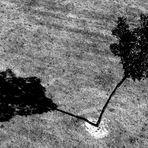 Baum mit Schatten
