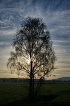 Baum mit Sonne