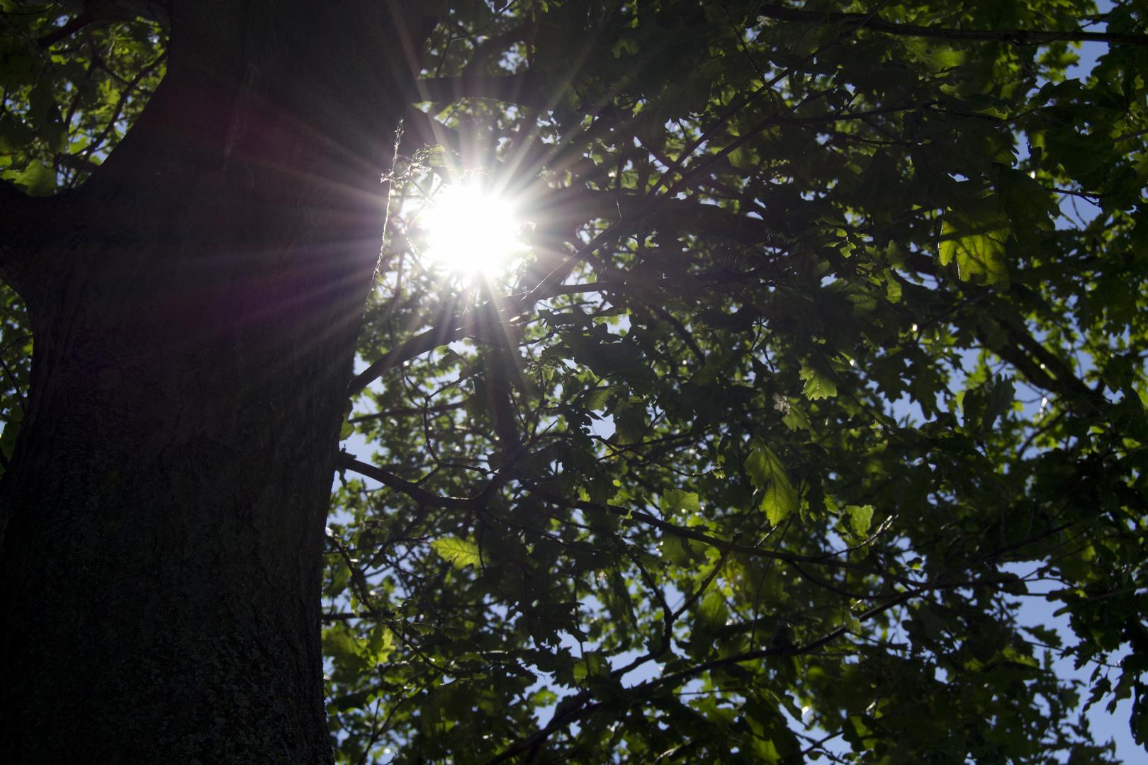 Baum mit Sonnenstrahlen