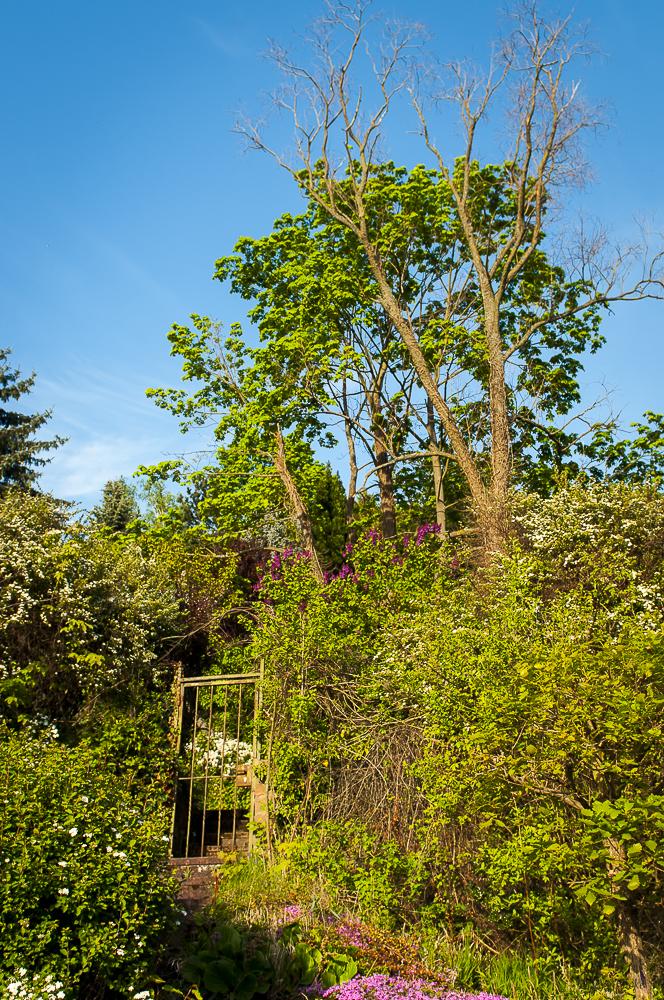 Baum mit Tor