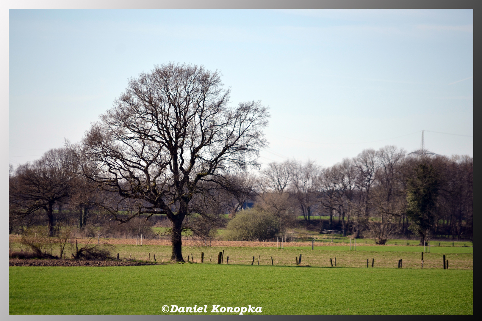 Baum mit Weide