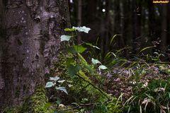 Baum, Moos, Gräser im WildparkSilz-9027