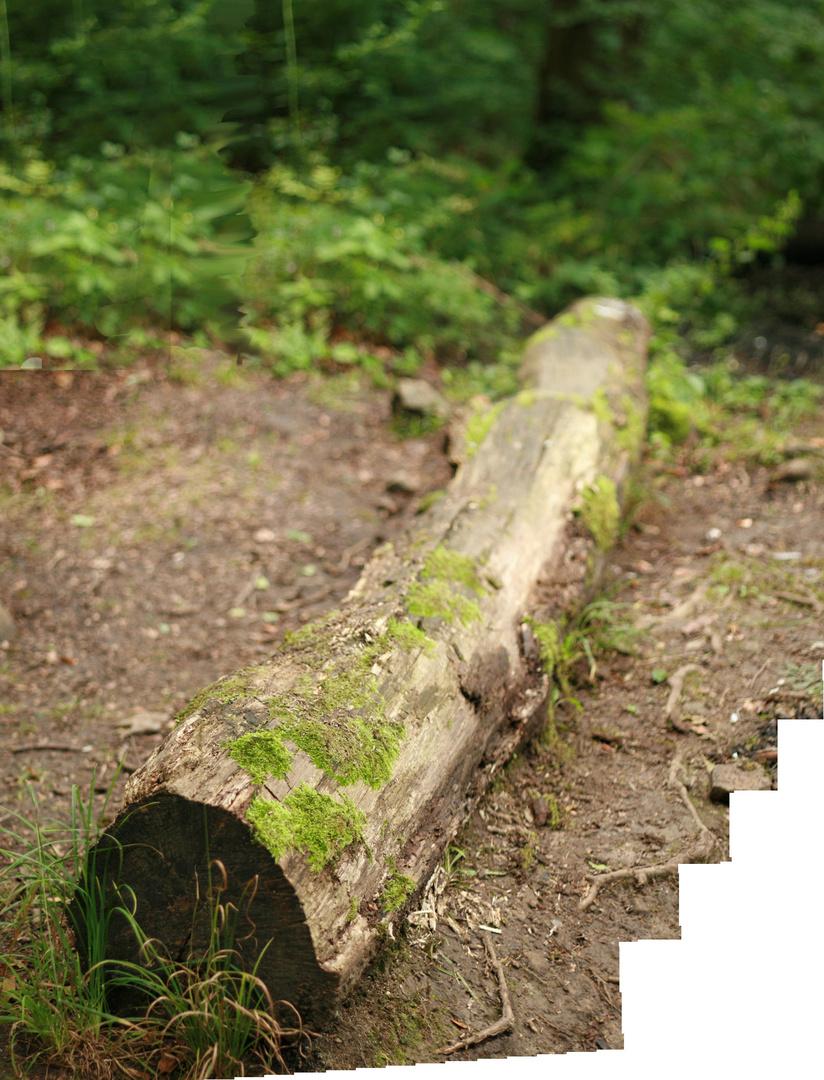 Baum nach Brenizer