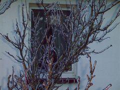 Baum nach Eisregen #2