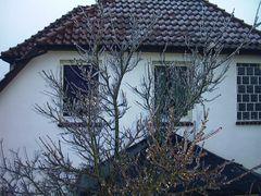 Baum nach Eisregen