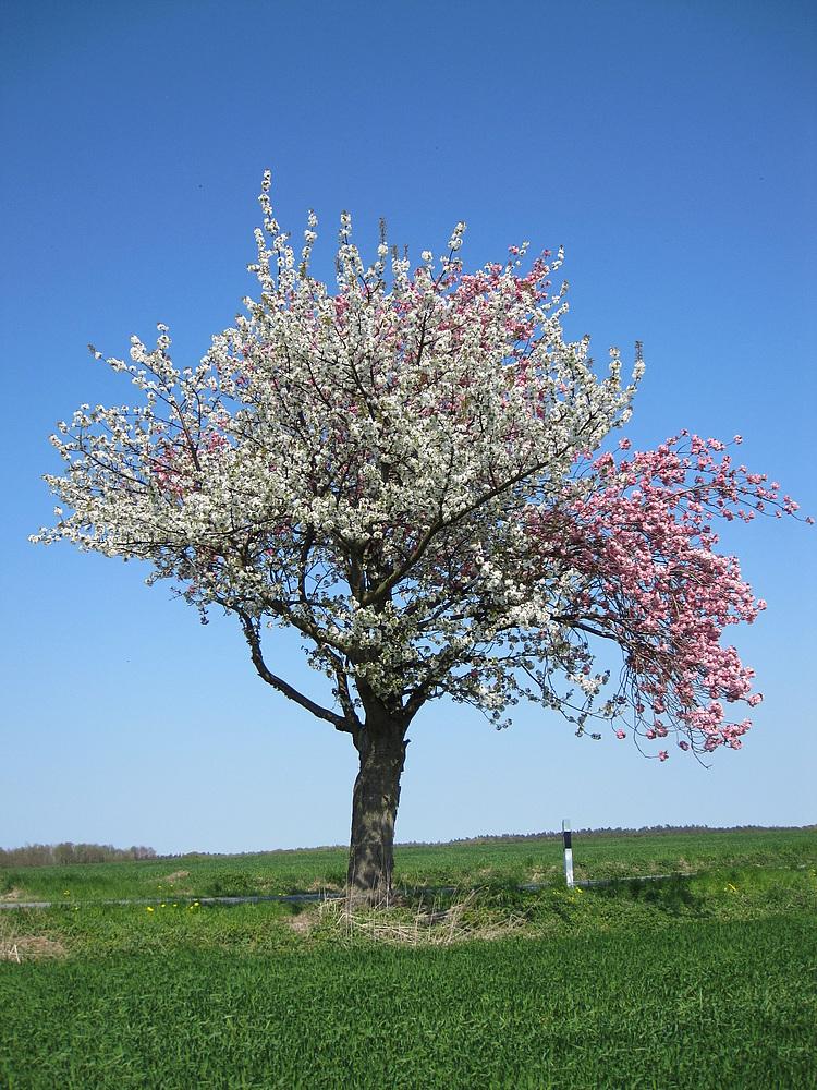 Baum Nr. 126