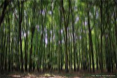 Baum oder Waldland .......