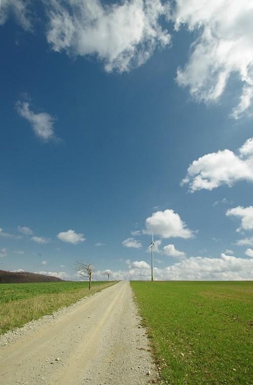 Baum oder Windrad...