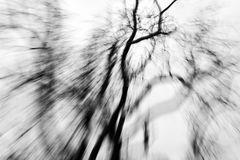 Baum ohne Blätter