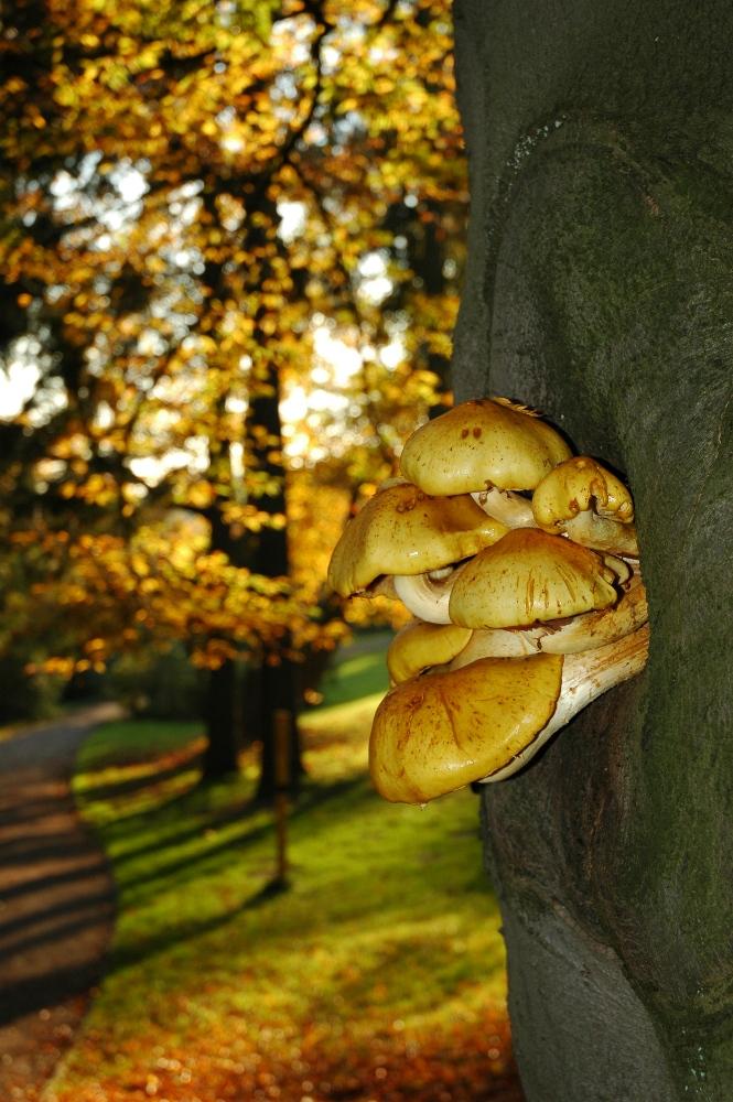 Baum - Pilze