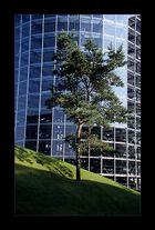 Baum + Stahl + Glas + Beton