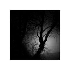 Baum-Stamm